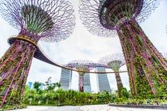 Ogródy zatoką - Singapur ` s Wonder ogród Obrazy Stock