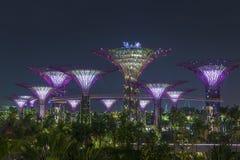 Ogródy zatoką, Singapur Fotografia Royalty Free