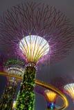 Ogródy Zatoką w Singapur Obrazy Stock