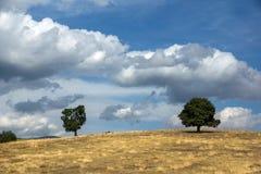 Ograzhden山绿色风景惊人的看法  免版税图库摄影