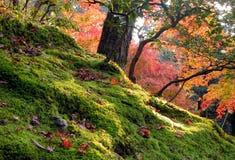 ogród jesieni Zdjęcia Royalty Free
