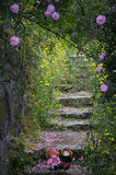 Ogród różany dla miłości Obraz Stock