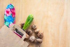 Ogrodnictwa i flancowania pojęcie Robić zakupy papierową torbę z sadzonkowym hiacyntem i żarówki gladiolusy kosmos kopii tło mlec Fotografia Stock