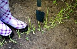 Ogrodnictwa pojęcie obrazy stock