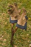 ogrodnictwa rękawiczek strzyżenia Zdjęcie Stock
