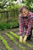 ogrodnictwa seniora kobieta obrazy stock