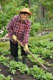 ogrodnictwa seniora kobieta zdjęcie stock