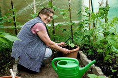 ogrodnictwa seniora kobieta Zdjęcia Royalty Free