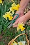 ogrodnictwo Zdjęcia Royalty Free