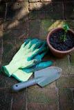 ogrodnictwo Zdjęcie Stock