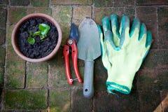 ogrodnictwo Fotografia Royalty Free