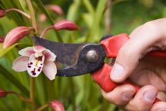 ogrodnictwo Obraz Royalty Free