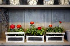 ogrodnictwo dom Fotografia Royalty Free