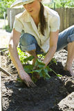 ogrodnictwo kobiety young Fotografia Stock