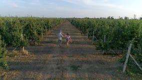 Ogrodnictwo, młoda kobieta i mężczyzna z dzieckiem na ramionach, zabawę w jabłczanym sadzie zbiory wideo