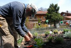 ogrodnictwo senior Obrazy Stock