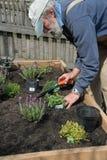 ogrodnictwo senior Zdjęcia Royalty Free