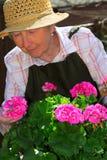 ogrodnictwo seniora kobieta zdjęcia royalty free