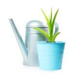 Ogrodnictwo skład z zieloną rośliną w kwiatu garnku podlewanie puszce i fotografia royalty free