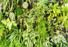 Ogrodnictwo temat, naturalna scena, greenery obraz royalty free