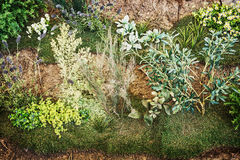 Ogrodnictwo temat, naturalna scena, greenery obraz stock