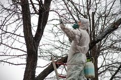 Ogrodniczek drzew pokryw pestycydy zdjęcie royalty free