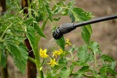 Ogrodniczka applaying insectecide Zdjęcia Stock