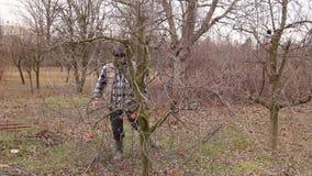 Ogrodniczka ciie gałąź, przycina owocowych drzewa z długimi strzyżeniami w sadzie zbiory