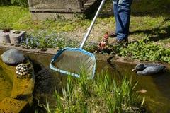 Ogrodniczka czyści staw z siecią, pływacki staw z kwitnąć sh Fotografia Stock