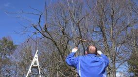 Ogrodniczka mężczyzna z dwa rękojeść cążkami przycina drzewa w owoc ogródzie w wiośnie zbiory wideo