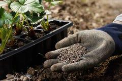 Ogrodniczka miesza organicznie użyźniacza humic granule z ziemią, bogaci ziemię obrazy stock