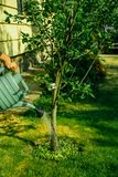 Ogrodniczka nawadnia drzewa zdjęcia royalty free