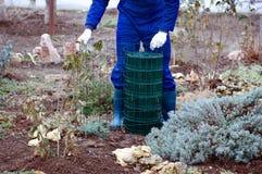 Ogrodniczka odwija kruszcową drucianą siatkę Zdjęcia Stock