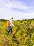 Ogrodniczka rozpyla herbicydy wokoło młodego drzewka palmowego t Obraz Stock