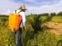 Ogrodniczka rozpyla herbicydy wokoło młodego drzewka palmowego t Fotografia Royalty Free