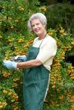 ogrodniczka senior Fotografia Royalty Free