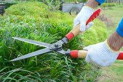 Ogrodniczka tnący żywopłot z traw strzyżeniami Zdjęcia Stock