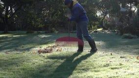 Ogrodniczka w ciepłych ubrania świntucha liściach na frosted ogrodowej trawie w jesieni 4K zbiory