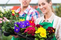 Ogrodniczka w targowym ogródzie lub pepinierze Fotografia Royalty Free