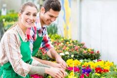 Ogrodniczka w targowym ogródzie lub pepinierze Zdjęcia Royalty Free