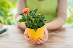 Ogrodniczka wręcza mienia kwiatu garnek z wzrastał zdjęcia stock