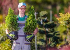 Ogrodniczka zakupy czas Obraz Stock