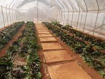 Ogrodniczki biznesowy pojęcie: młodych rośliien szklarni pepiniera Fotografia Stock