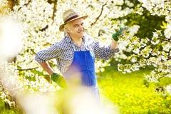 Ogrodniczki Czereśniowego drzewa okwitnięcia strawhat fartuch obraz stock