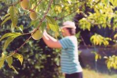 Ogrodniczki działanie fotografia royalty free