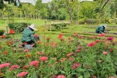 Ogrodniczki działanie Fotografia Stock