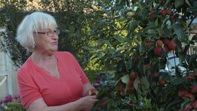 Ogrodniczki kobiety przyglądająca jabłoń i i zbierający owoc w wieś ogródzie zdjęcie wideo