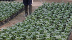 Ogrodniczki natryskownica zdjęcie wideo