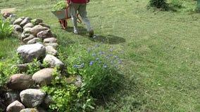Ogrodniczki odtransportowanie cutted trawy z wheelbarrow zdjęcie wideo