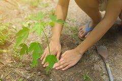 Ogrodniczki są tnącymi drzewami obrazy royalty free
